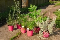selection of pink pots